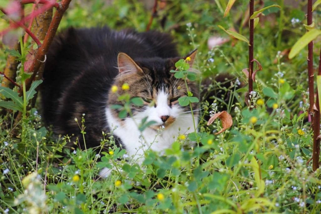 Katze · Urlaub am Bauernhof Marchlhof in Untertauern, Salzburg