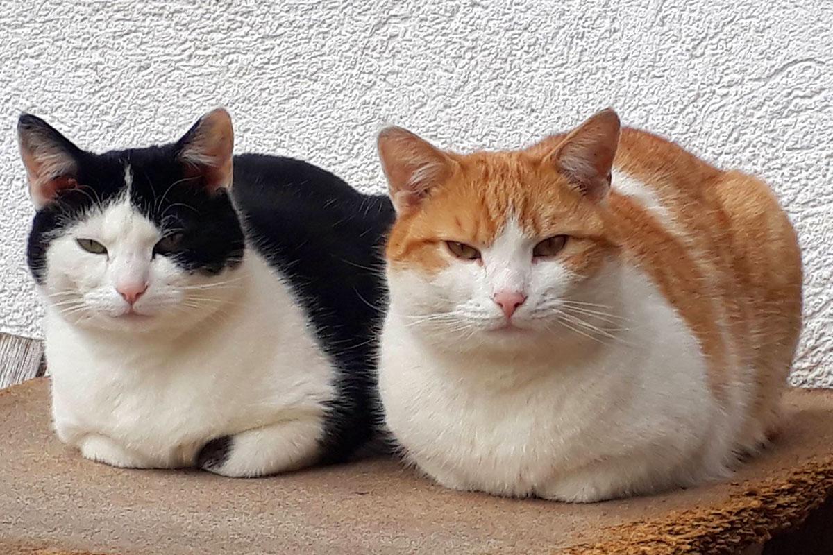 Katzen - Urlaub am Marchlhof, Untertauern