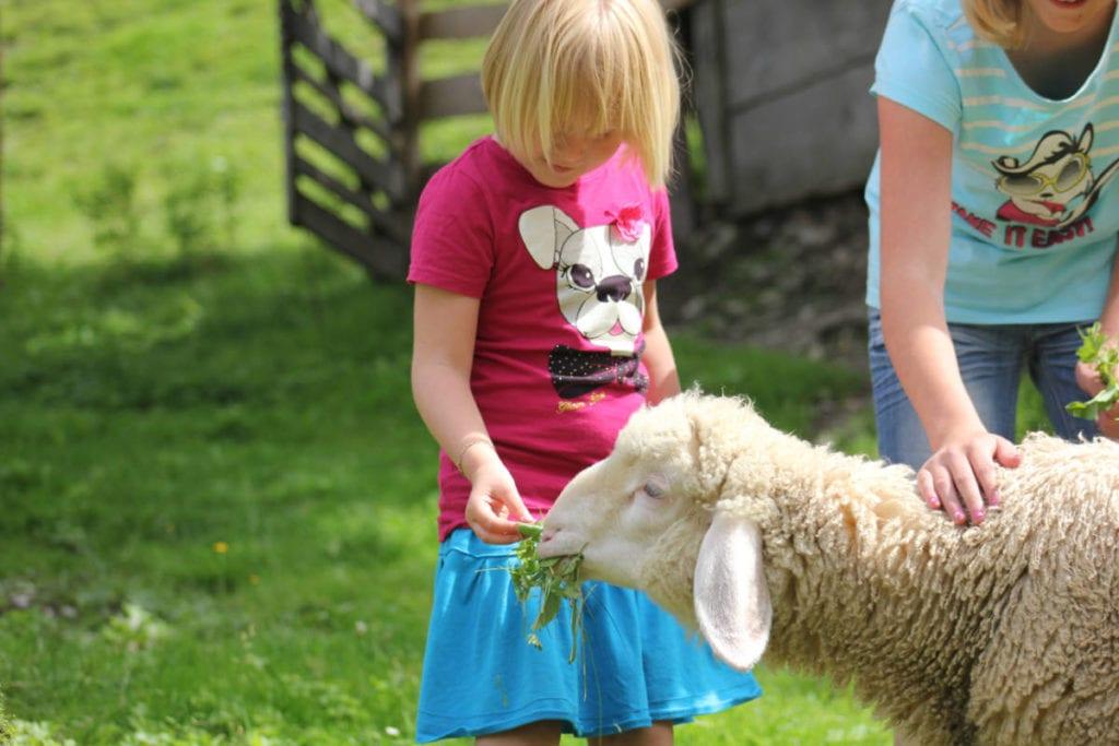 Schaf · Bauernhofurlaub & Urlaub am Bauernhof Marchlhof in Untertauern