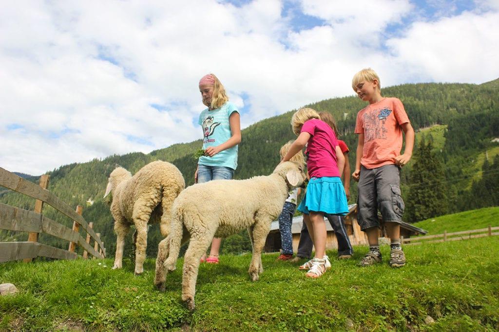Streicheltiere - Familienurlaub im Salzburger Land, Untertauern