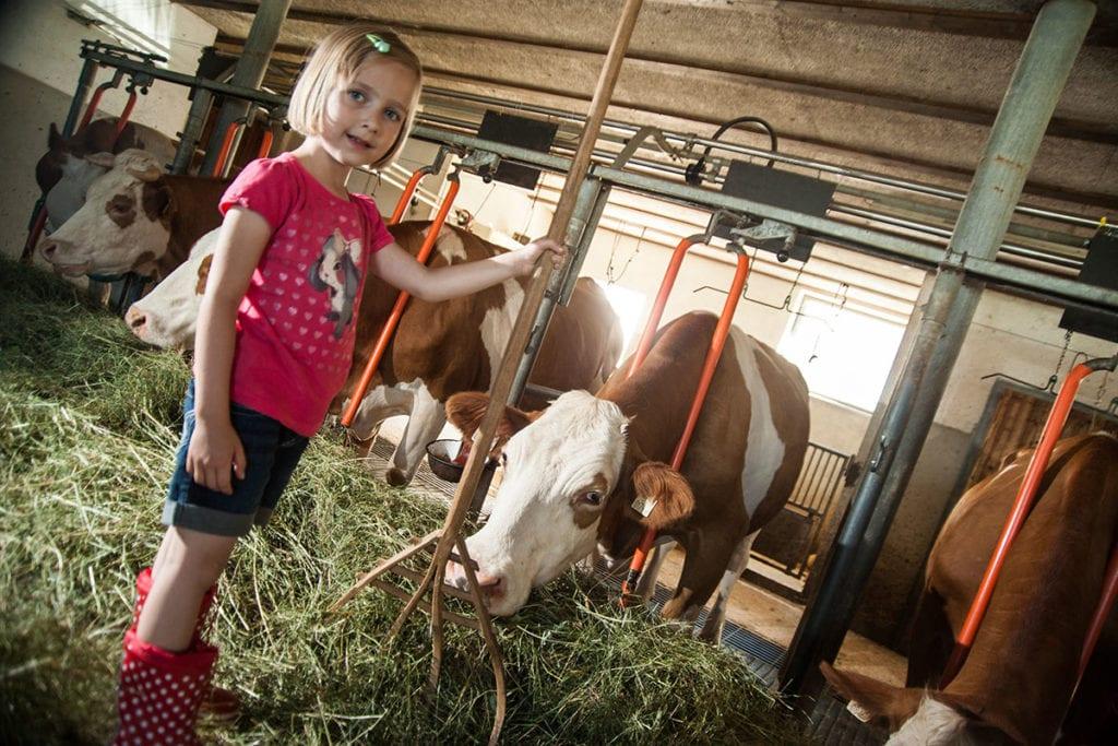 Kühe · Urlaub am Bauernhof Marchlhof in Untertauern, Salzburg